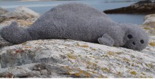 Gray Seal heating pad resting on a rock near the ocean; words say,