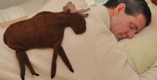 Man relaxing on a bed with a Moose microwave heating pad for the back
